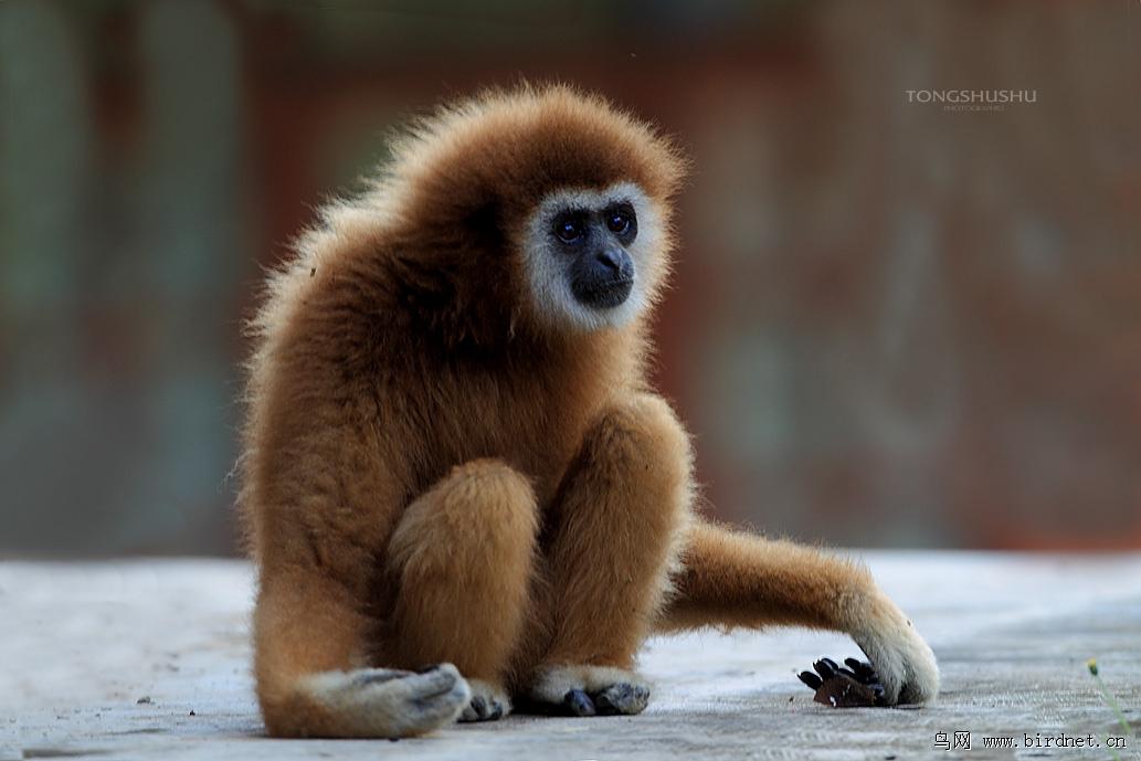 泰国森林里的小动物