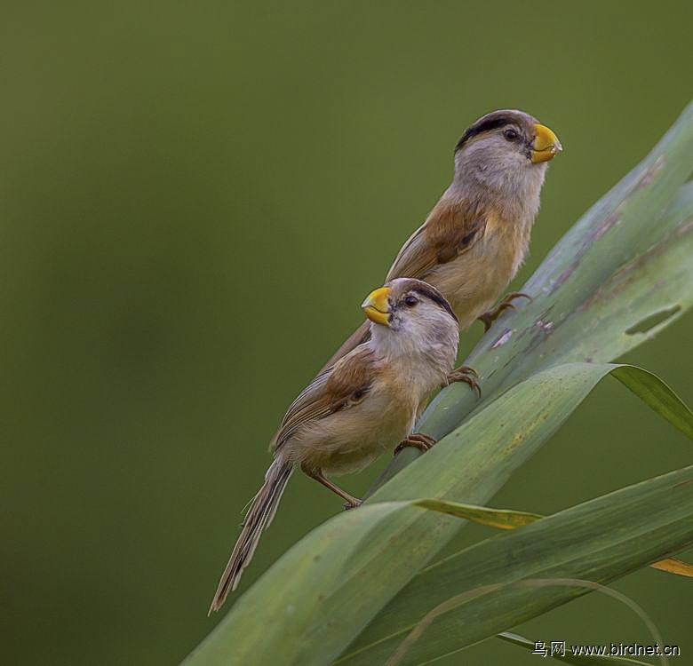 拍的林鸟 迎接鸟类迁徙