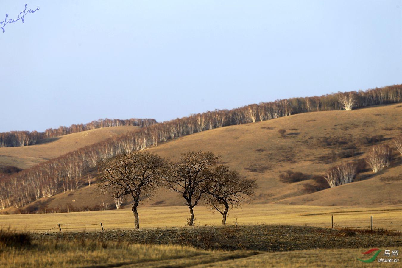白音敖包初春的夕阳余晖景色