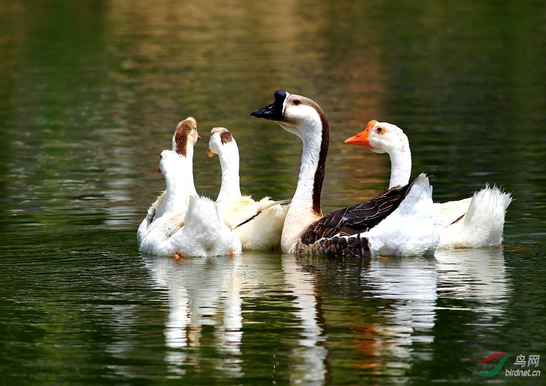 泥鳅孵化池设计示图-游客 鸟网 鸭 池塘