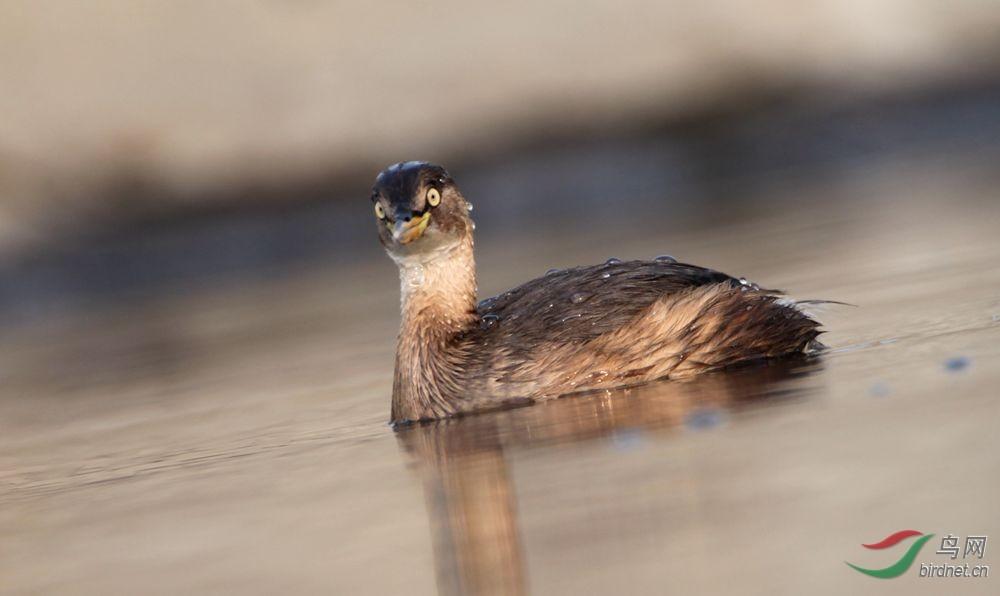 12月22日向鸟类道歉的日子 - 北京版 Beijing 鸟
