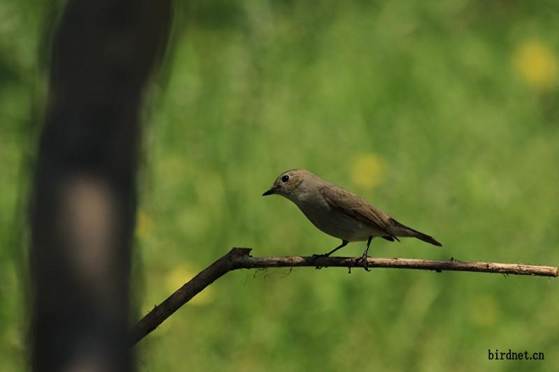 一组可爱的小鸟卖萌表情---背后应该唤起人类爱鸟的