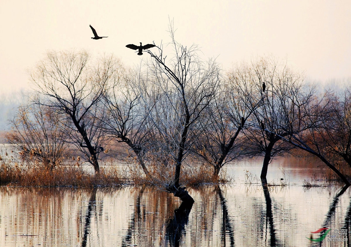 远方的呼唤 - 广东版 Guangdong 鸟网