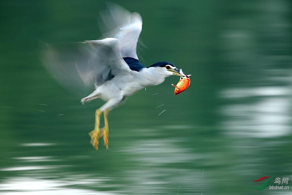 天地劫105正式已过鸟打鸟方法少儿不易有心脏病者勿进TMD鸟鸟鸟