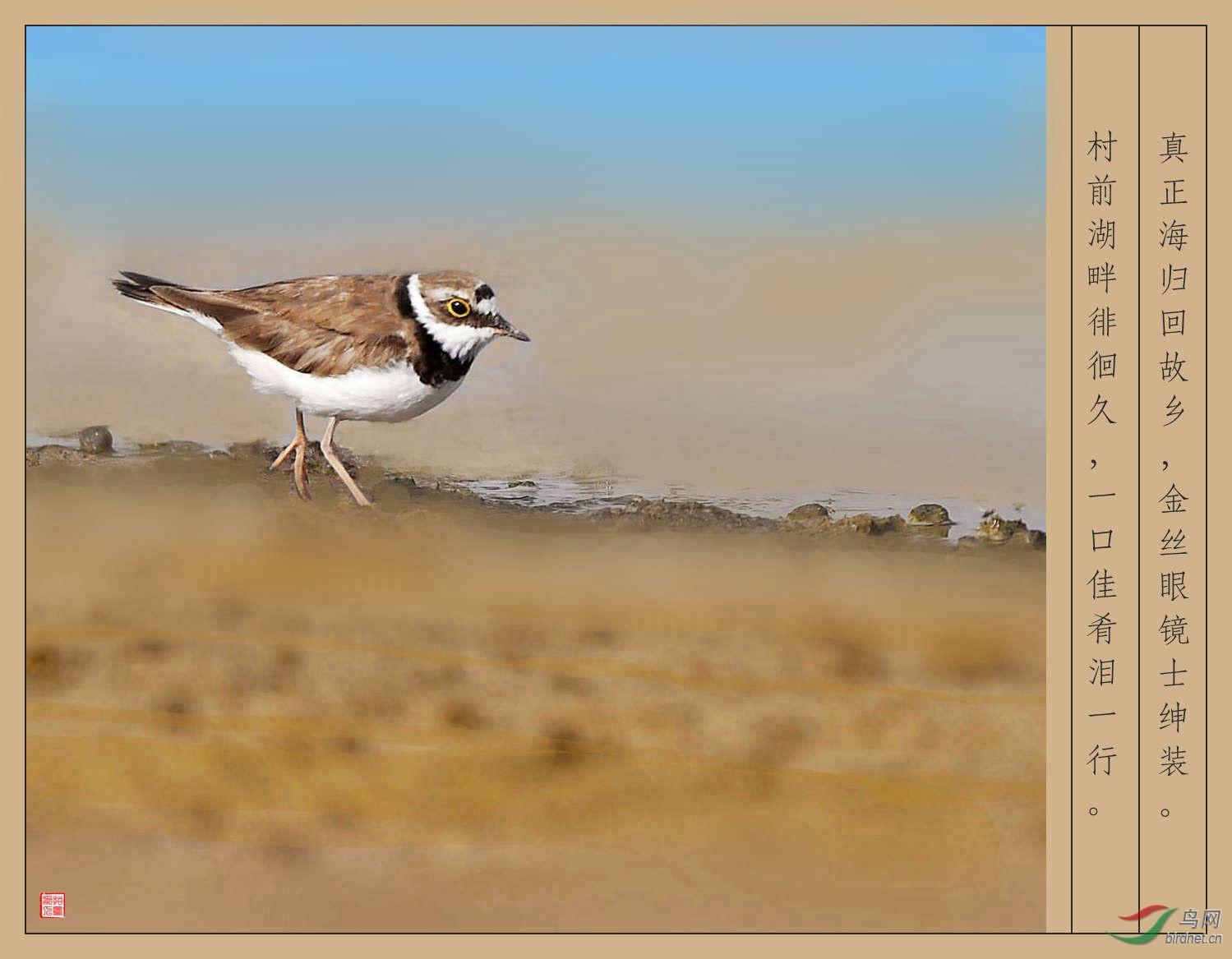 金眶(原创竹枝词其五)-文化鸟类鸟网嫁漫画自图片
