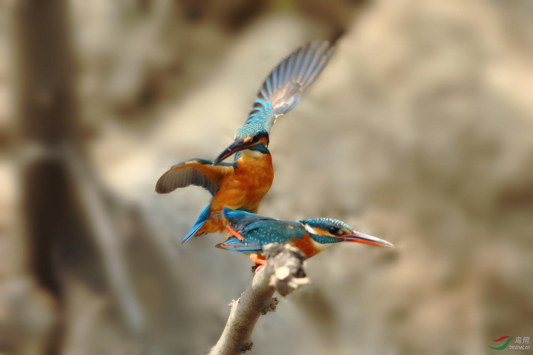 繁衍生息--拍于动物园 - 北京版 Beijing 鸟网