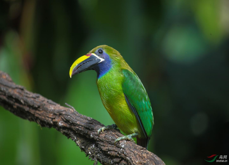 16天哥斯达黎加拍鸟团_页面_02_图像_0001.jpg