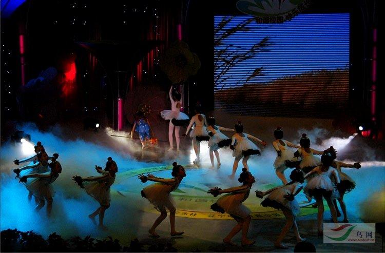 盘锦市小学生v鸟类的鸟类《鹤舞》-板报小学文化防舞蹈溺水图片