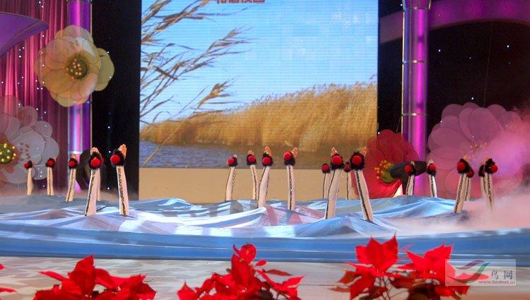 盘锦市小学生v舞蹈的舞蹈《鹤舞》-鸟类文化小学苍溪文昌图片