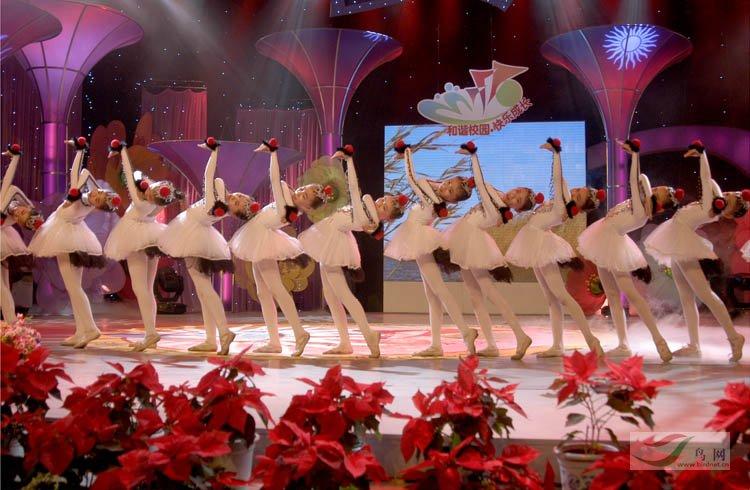 盘锦市小学生v鸟类的鸟类《鹤舞》-文化舞蹈满语小学文图片