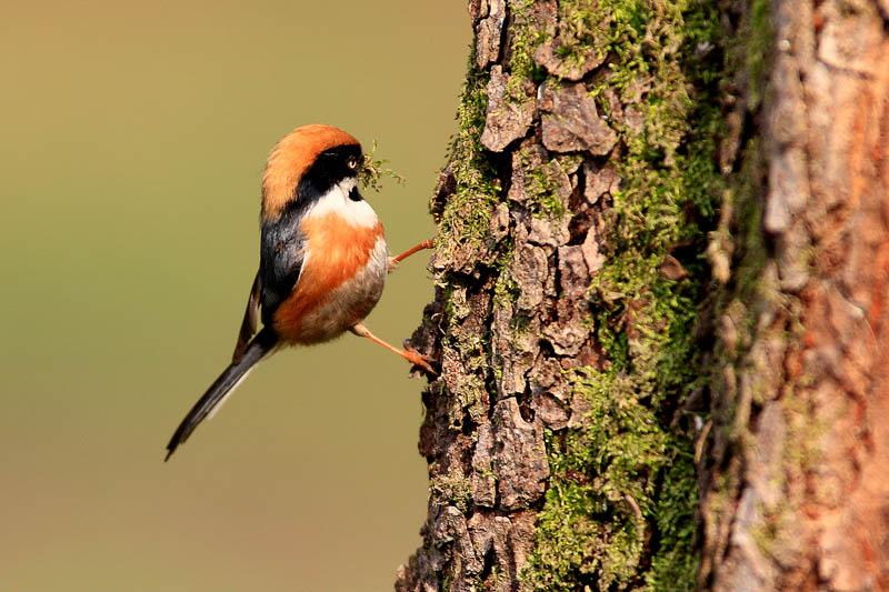 林中小鸟 22幅
