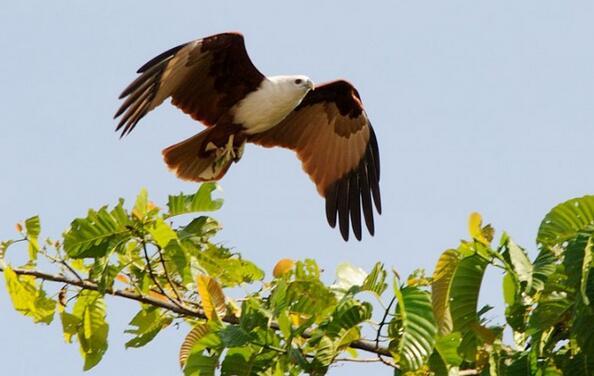 马来西亚沙巴州拍鸟生态摄影之旅10天