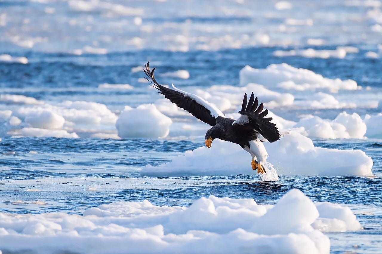 2018北海道拍鸟摄影之旅